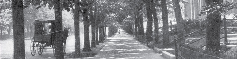 Double rows of linden trees on Mass Ave, 1913