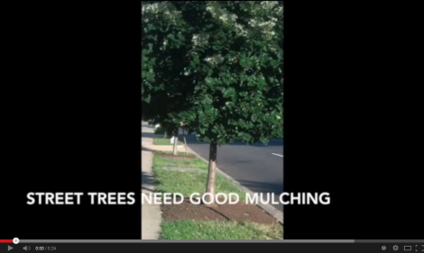 Tree Mulching Video - 1st page